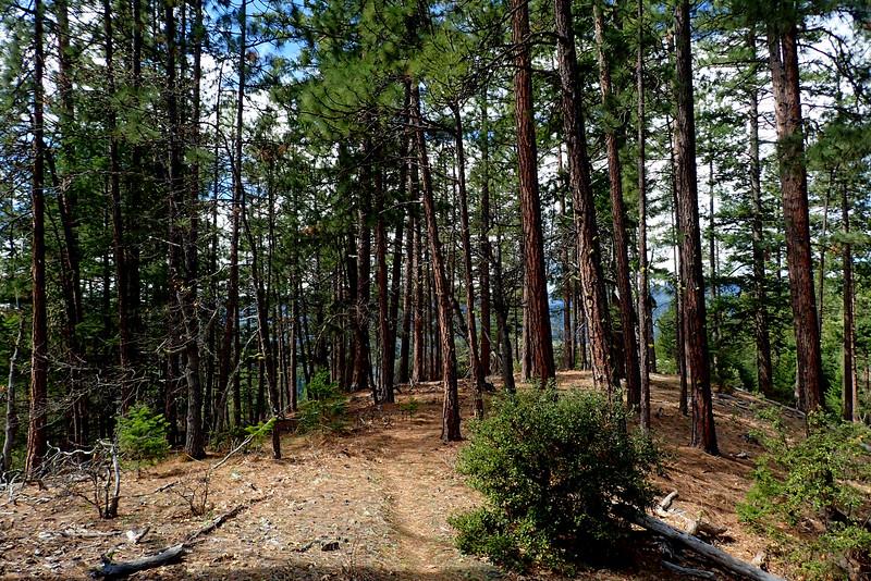 Charlie Buck Trail Applegate Valley