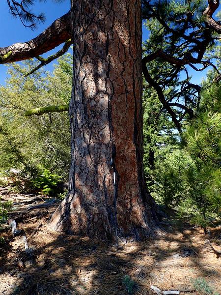 Elliott Ridge Trail Applegate Valley